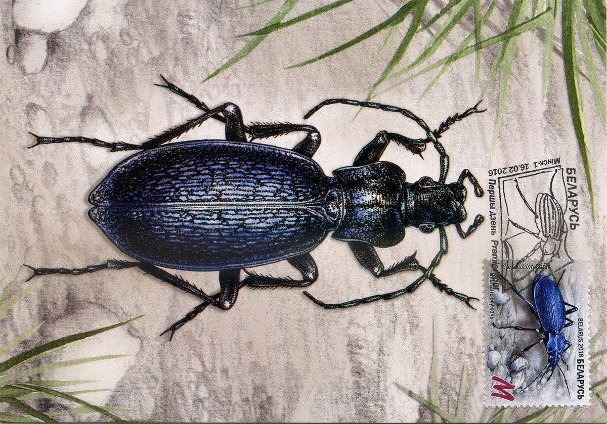 картинки жуки беларуси чистый воздух, тишина